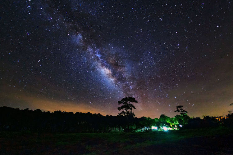 Trees against star field at night