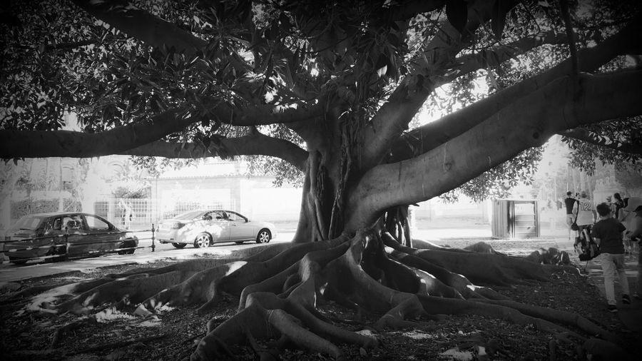 Tree Car Nature