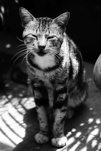 Sit and Silence Bw Indonesia_photography Animals Hayomoto Blackandwhite Photography Black And White EyeEmNewHere Blackandwhite Black & White Cat Cute Cats Of EyeEm Cute Pets Animal Photography Mood Captures Mood Hewan INDONESIA Eye Domestic Cat Pets One Animal Domestic Animals Animal Feline Animal Themes Mammal Portrait No People Ear Indoors  Collar Close-up Day