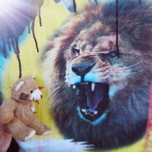 ANTZ HELP IT'S MY TEACHER Lion EyeEm Best Shots EyeEmNewHere First Eyeem Photo Circus Children Bears Happy Mammal Day One Animal No People Animal Themes Close-up Portrait Nature Outdoors