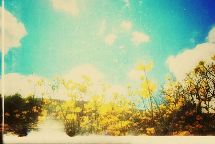 Nature EyeEm Nature Lover Life In Colors Sky Dream Beauty Light And Shadow Yellow Flowers Blue