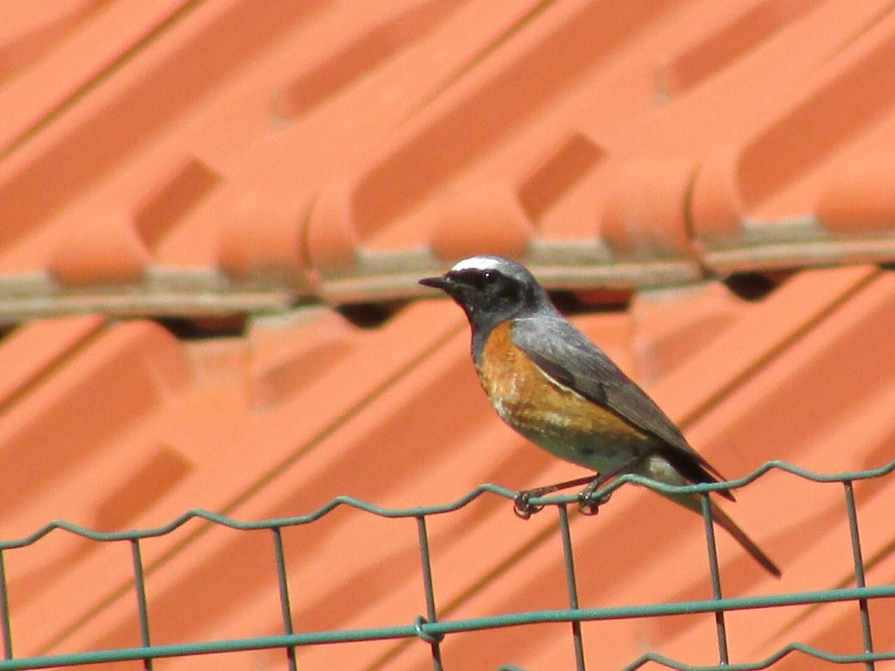 Close-up side view of a bird on fence
