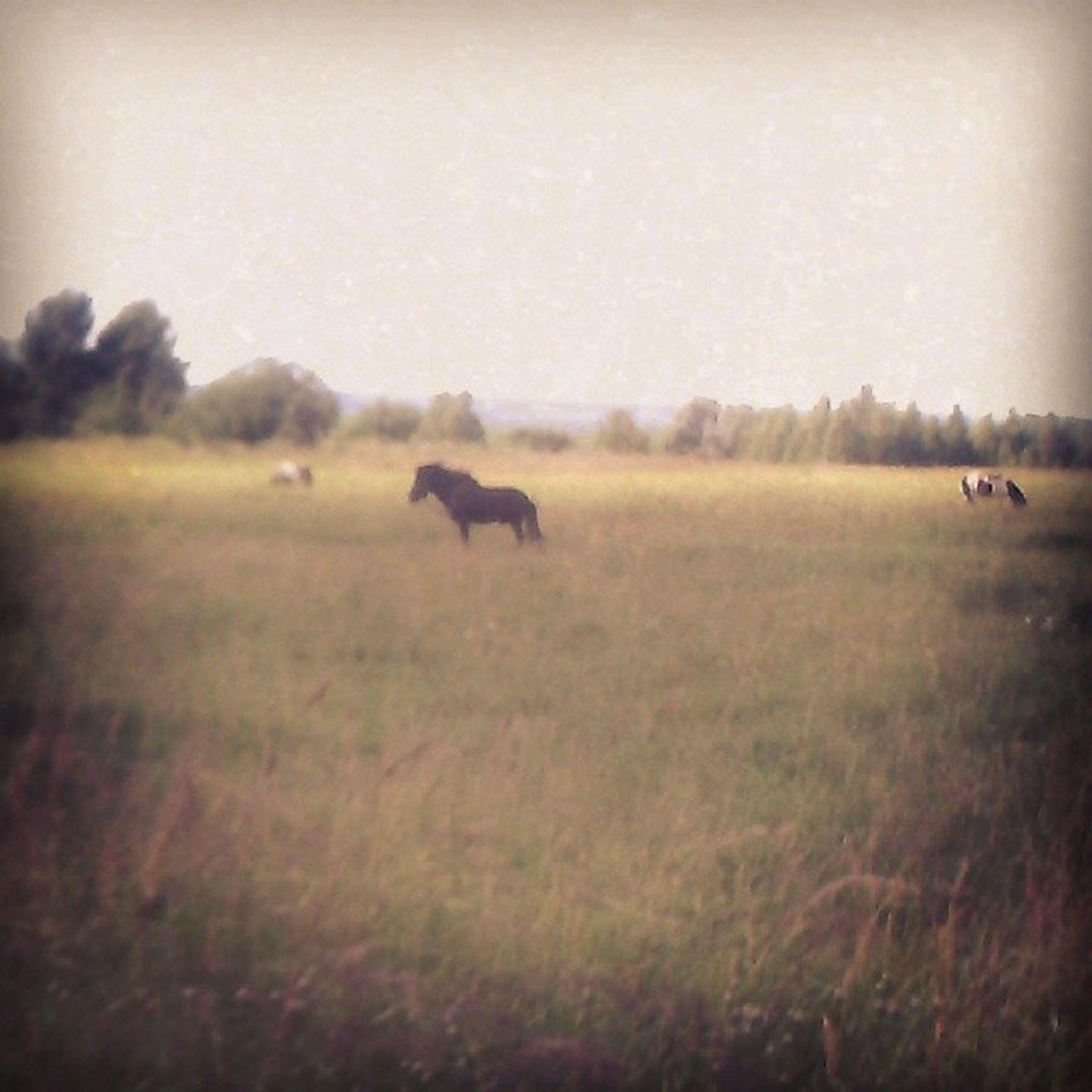 лошади пони Пастбище красотенская красота