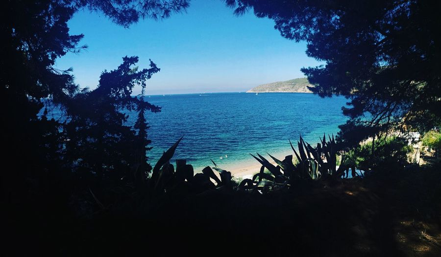 Dream island Dream Island Islandlife Wild Pines Pine Beach Sky Cyan Blue Sky Clear Water Turquoise