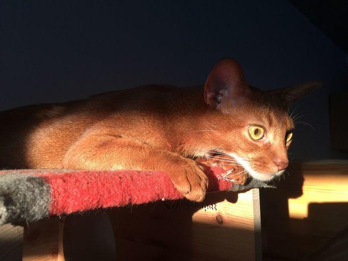 Portrait of cat indoors