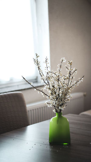 Close-up of small plant in vase on table