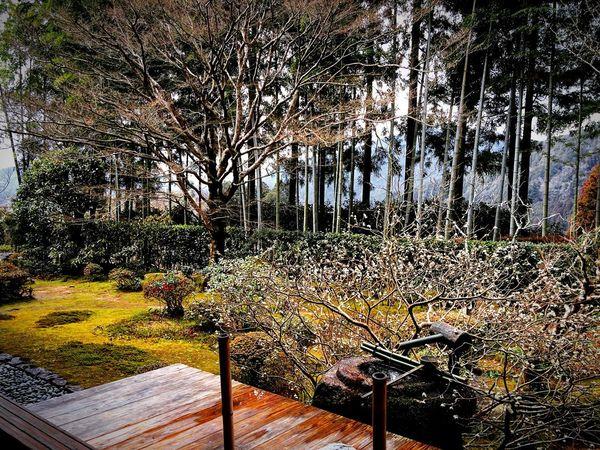 宝泉院 大原 京都 Kyoto Relaxing 庭園