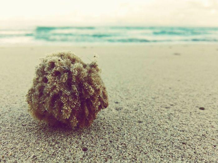 Beach Sand ocean Esponge Sea mediterranean Beauty In Nature Shower natural Close-up Wave Water