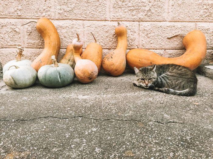 High angle view of pumpkins on wall