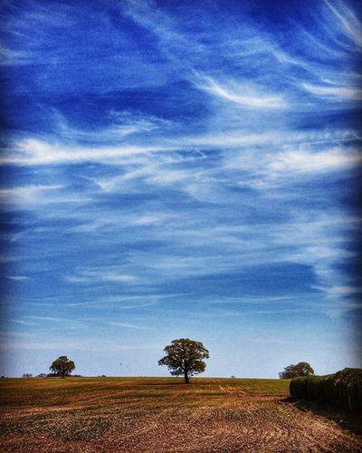 Landscape Beautiful Sky Landscape Landscape_photography Lonely Tree Panasonicgx7