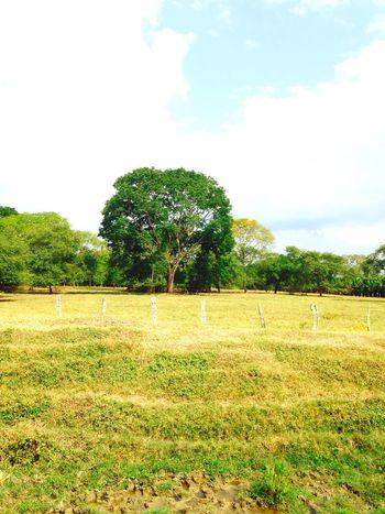 Farm Tree Nature
