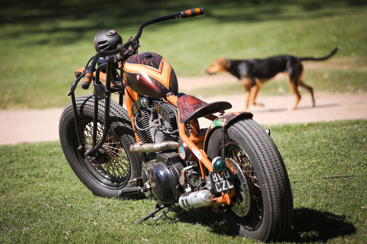 Transportation Mode Of Transportation Motorcycle Grass Land Vehicle Day Field One Animal Mammal Nature Focus On Foreground Stationary Pets Domestic Land People Domestic Animals Canine Wheel