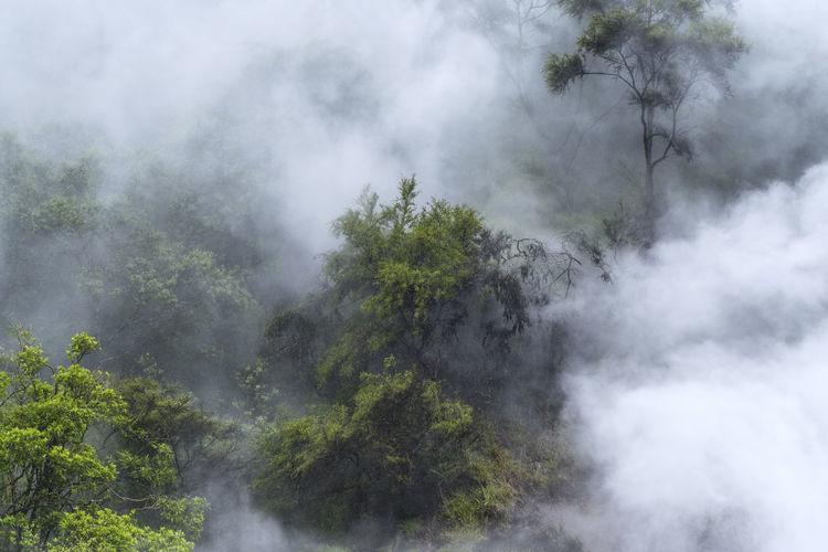 Smoke emitting from tree against sky