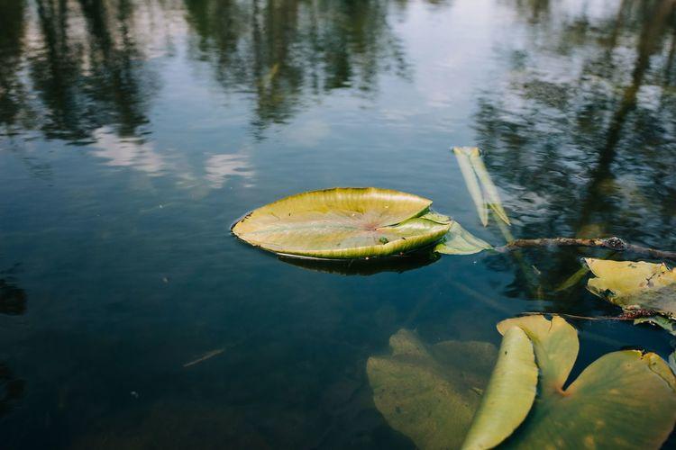 Close-up of fruits floating on lake