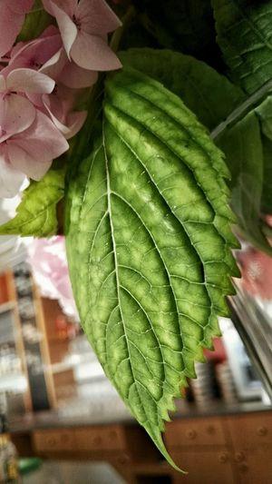 Macro Photography Structure Maserung Leave Beauty Of Nature Struktur Greenery Indoor Shot Macro Detail Close-up Makro Flower Flower Power🌼 Makro Maximum Closeness
