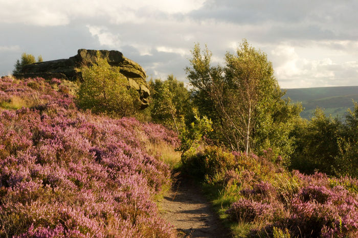 Growth Tree Cloud - Sky Plant Nature Landscape No People Flower Agriculture Outdoors Scenics Sky Rural Scene Day Beauty In Nature Heather Tranquility Tree Yorkshire Calderdale Moors Freshness Tranquil Scene Summer Norland Moor Lost In The Landscape