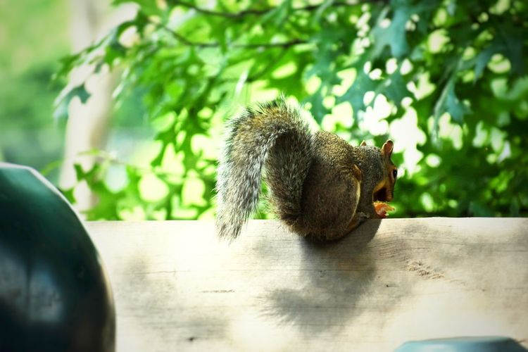 """""""They Move, finished and Complete """" #naturelove #furryfriend Hedgehog Squirrel"""