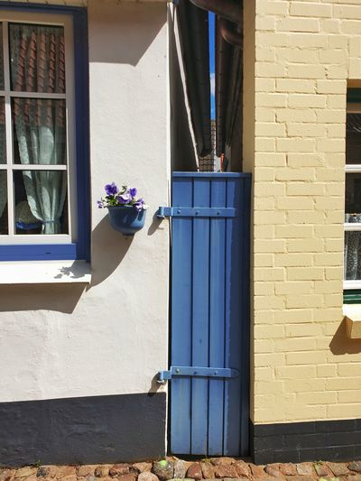 Potted plant on wall of building