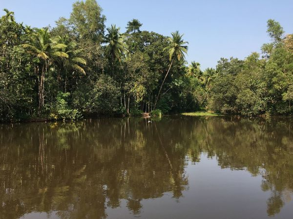 Clear Sky Day Goa Growth India Lake Nature No People Outdoors Reflection Reflection Lake Sky Tree Water
