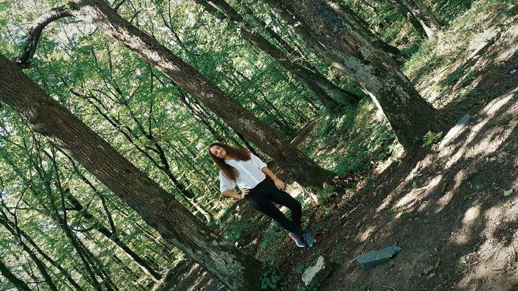 Atatürk Arboretumu Trees Peaceful Green Green Green!  Green Leaves Sunny Day Summer Memories... Orman Ormanhavası Clean Air Smile Photography Nature Photography