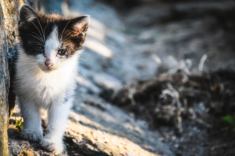 No People Outdoors EyeEm Nature Lover EyeEmNewHere Nature Nature Photography Photography Photooftheday Poland Close-up Animal Cats Cats Of EyeEm Animal Themes Pets Portrait Feline Domestic Cat Looking At Camera Beauty Cute Ear Kitten Happiness Animal Eye Stray Animal Cat Animal Face