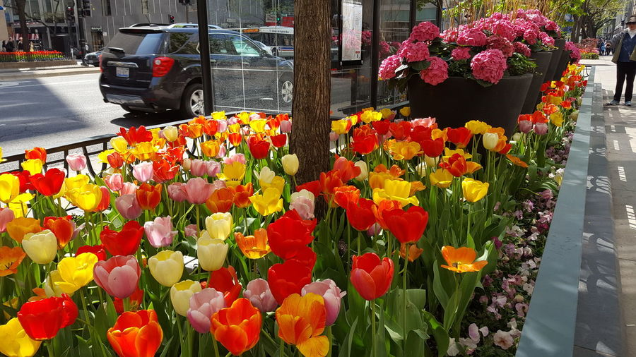 Beauty In Nature City Street Cityscape Flower Fowers Nature Outdoors Spring Spring Chicago Springtime
