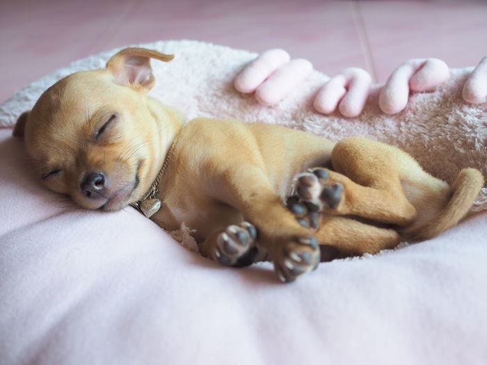 View of a dog lying on bed