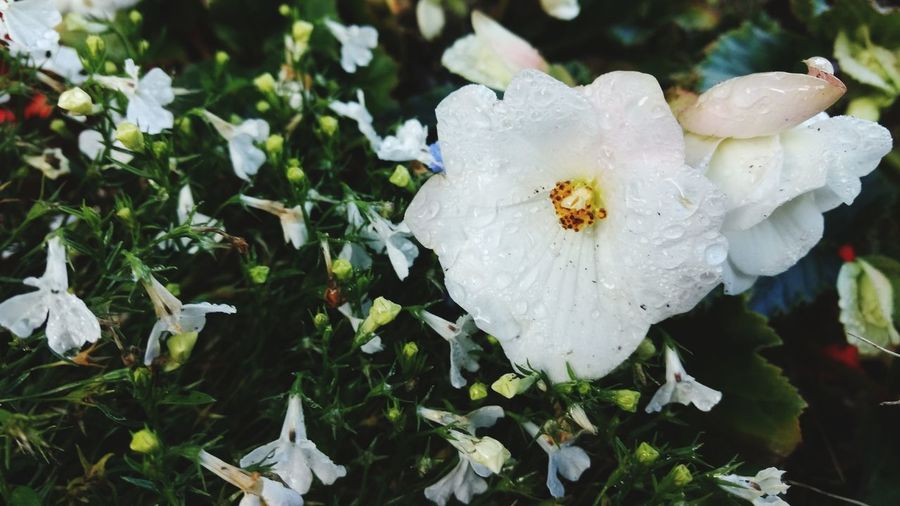 Flower Nature Fragility White Color Petal Flower Head Beauty In Nature Close-up Outdoors Growth Day No People Plant Freshness EyeEmNewHere EyeEm Selects Photographing Photography Themes Freshness Autumn Plant Growth Beauty In Nature Nature Wet
