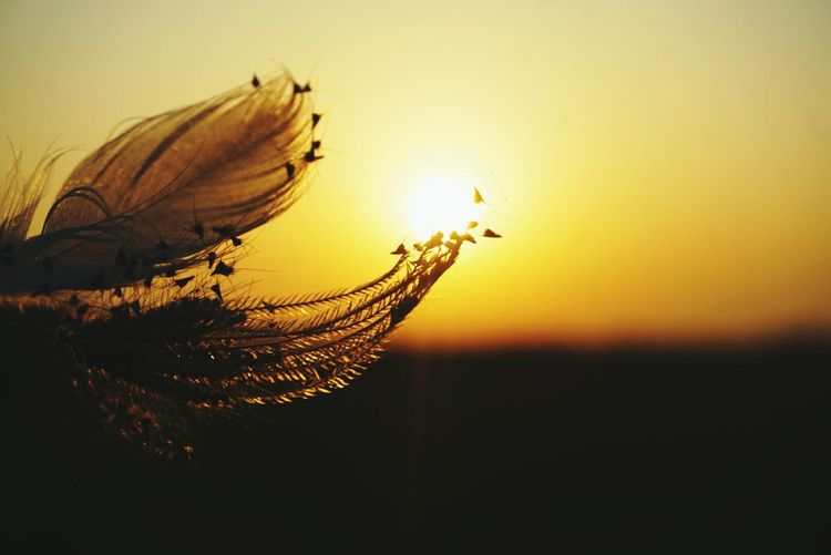 Ibua : sunshine