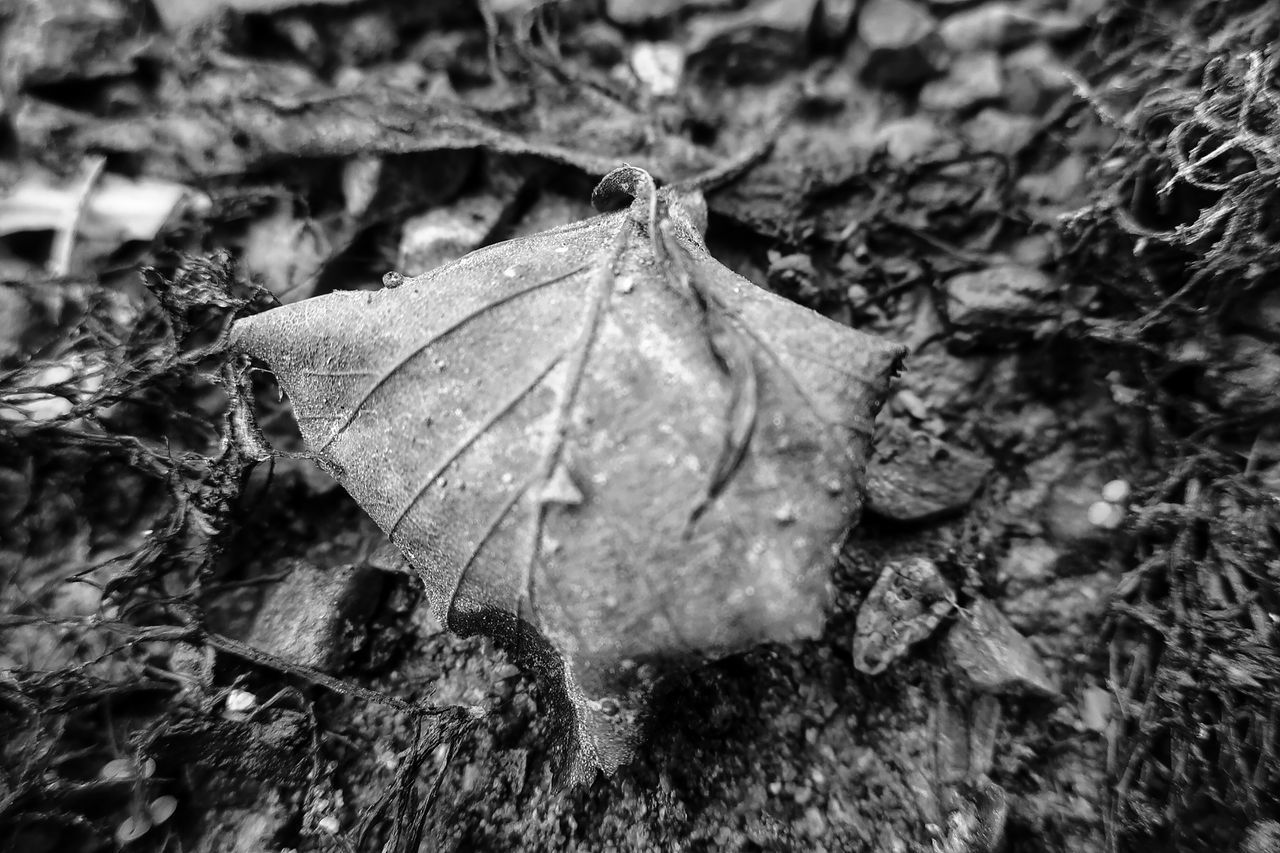 CLOSE-UP OF DRY LEAF ON FIELD