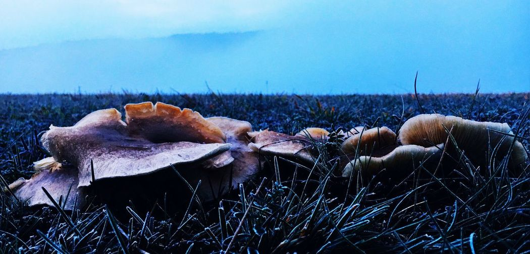 Plant Beauty In Nature No People Nature Tranquility Sky Scenics - Nature Day Land Frozen Landscape Field The Creative - 2018 EyeEm Awards The Great Outdoors - 2018 EyeEm Awards The Still Life Photographer - 2018 EyeEm Awards Grass Growth Fungus Mushroom Outdoors EyeEmNewHere