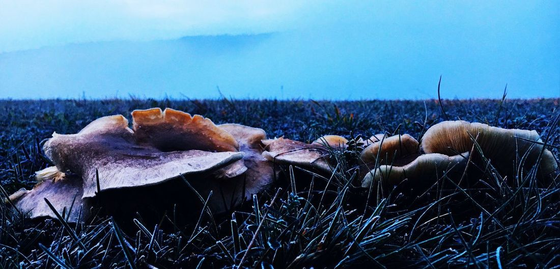 Plant Beauty In Nature No People Nature Tranquility Sky Scenics - Nature Day Land Frozen Landscape Field The Creative - 2018 EyeEm Awards The Great Outdoors - 2018 EyeEm Awards The Still Life Photographer - 2018 EyeEm Awards Grass Growth Fungus Mushroom Outdoors EyeEmNewHere This Is Strength Autumn Mood It's About The Journey