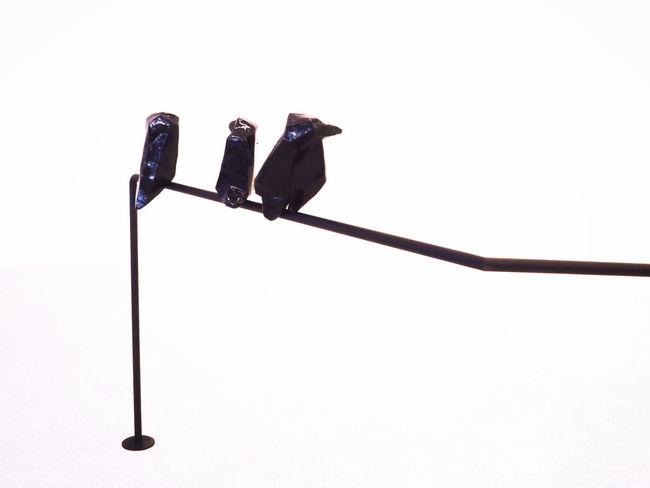 Minimalism Modern Art No People Paperboard Design Perching Ravens Silouhette White Background