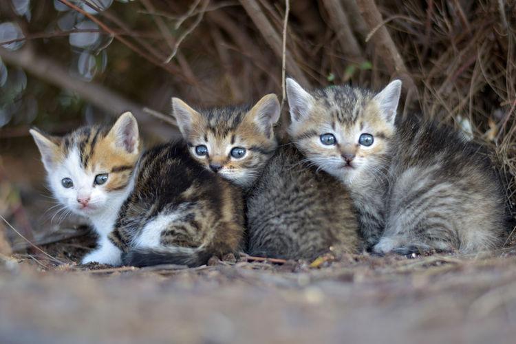 Kittens resting on field