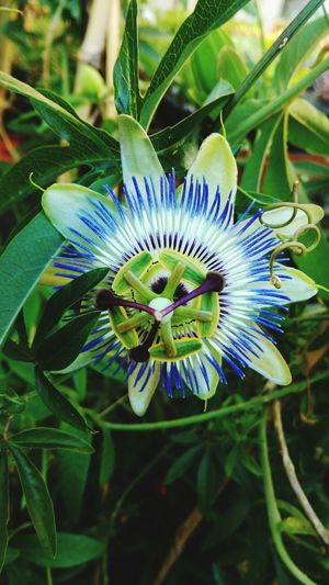 Mobile Photography Htc One M8s Colorful Flowers Check This Out