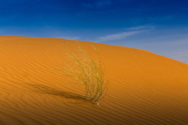 Saudi Arabia Desert Arid Climate Beautiful Beauty Beauty In Nature Desert Fun Nature Nature Out Outdoors Peaceful Riyadh Sand Sand Dune Saudi Arabia Sky Weekend Winter