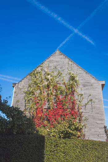 Autumn Mood Plant Built Structure Architecture Sky Nature Blue Building Exterior Growth Low Angle View Sunlight Day No People Clear Sky Flower Building Flowering Plant Outdoors Tree Beauty In Nature House Stone Wall