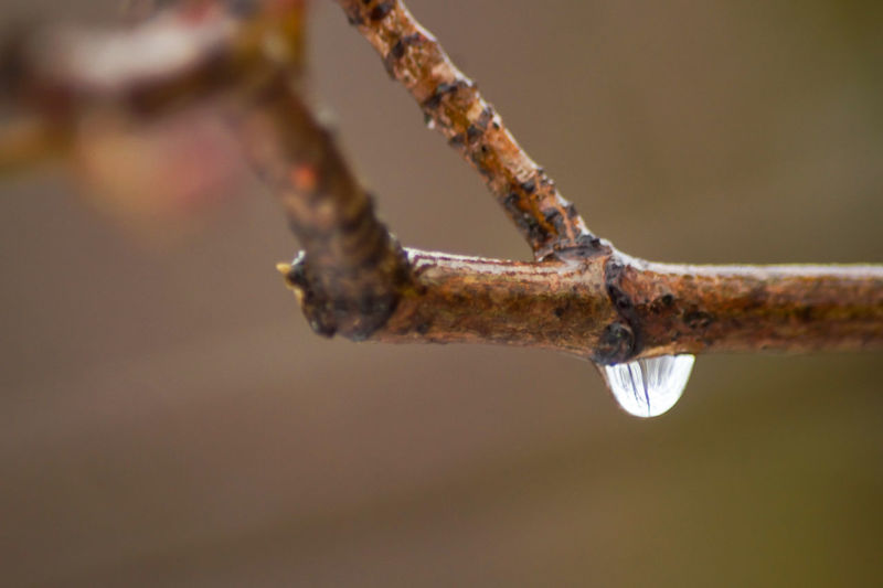 waterdrop on a branch Close-up No People Rusty Focus On Foreground Branch Day Selective Focus Nature Plant Metal Tree Outdoors Old Twig Weathered Water Macro Extreme Close-up Decline Damaged Water Drop Drop