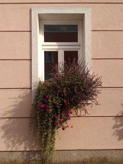 Fenster Und Türen Fenster Window Flowers Blumen Fenstergarten Wien Vienna Austria Architecture Architektur Windows And Doors