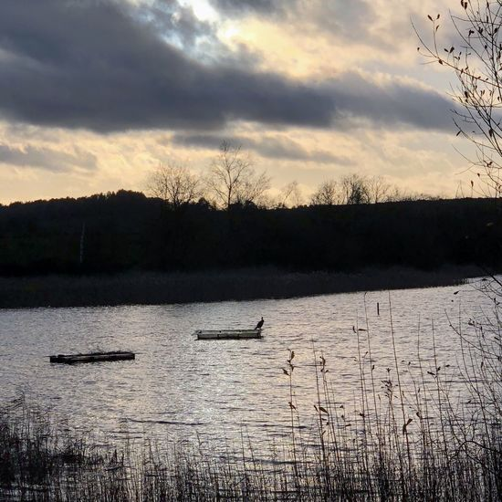 Late afternoon at Frensham Little Pond Sky Nature Cloud - Sky Water Beauty In Nature Scenics Silhouette Tree Tranquil Scene Bird Lake Outdoors No People Tranquility