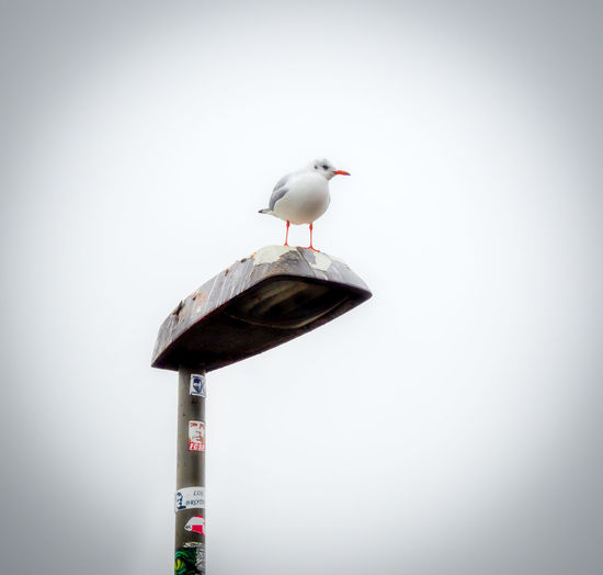 Wasservogel auf