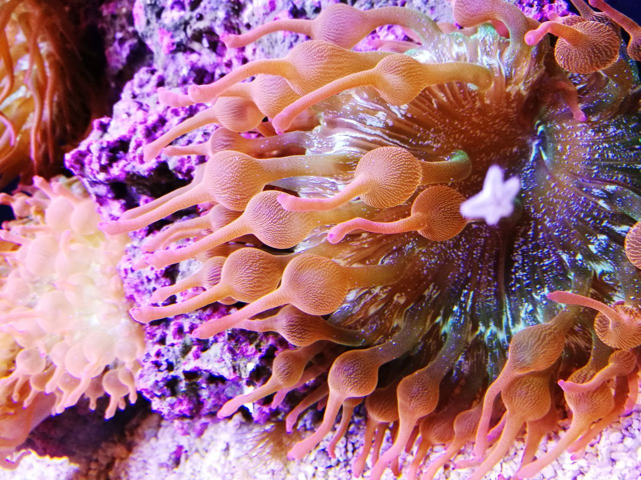 underwater, sea life, undersea, coral, sea anemone, sea, animal themes, animal wildlife, no people, tentacle, animals in the wild, water, one animal, clown fish, nature, close-up, beauty in nature, fragility, outdoors, mammal, day