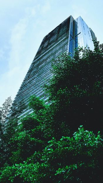 Utopian Illusion Low Angle View Green Color No People Sky Tree Outdoors Architecture Looking Up Skyscraper Building Blue Urban Huaweiphotography Huawei Gr52017