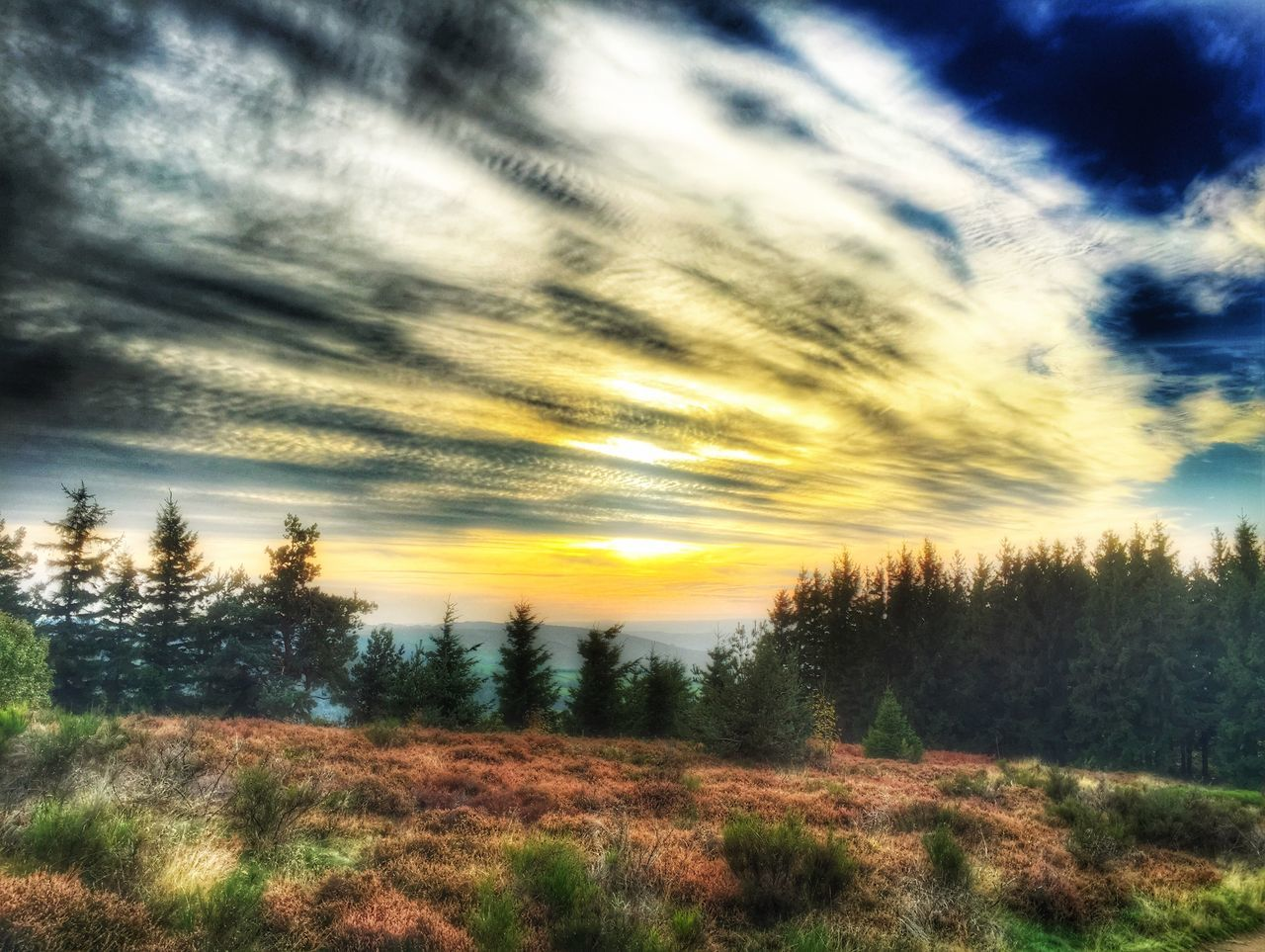 nature, scenics, tranquil scene, tranquility, beauty in nature, tree, landscape, sky, cloud - sky, no people, sunset, outdoors, grass, day