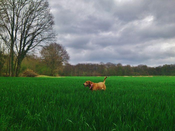 View of dog walking in field