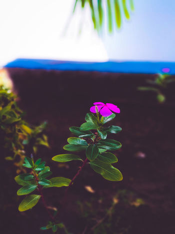 Flower Plant Leaf Nature Green Color Social Issues