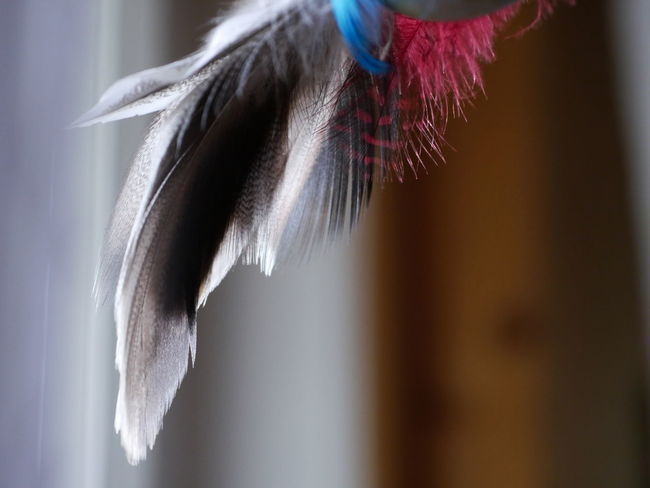 Feathers Pattern, Texture, Shape And Form Animal Animal Themes Art And Craft Close-up Clothing Craft Day Feather  Feathering Feathers Of A Bird Focus On Foreground Hanging Indoor Photography Indoors  Multi Colored Nature No People Selective Focus Softness Structure Textile Vertebrate Wool