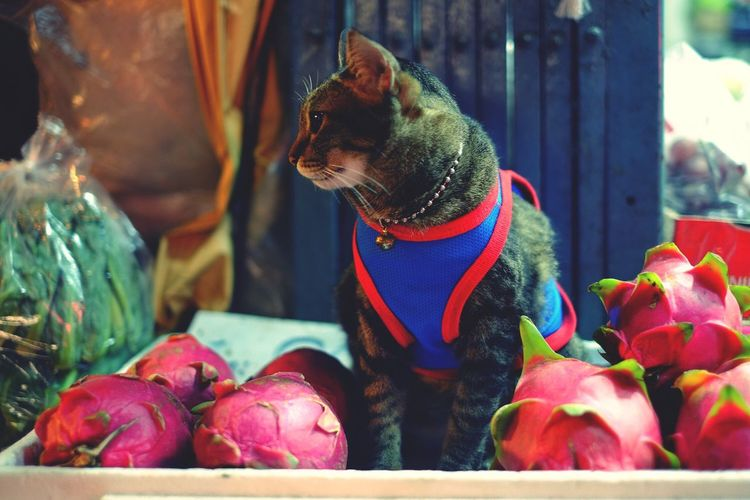 Pets Domestic Animals One Animal Animal Themes Mammal Dog No People Close-up Pet Clothing Outdoors Cat Street Streetphotography Street Cat Thailand Bangkok Night Market Fruit Market