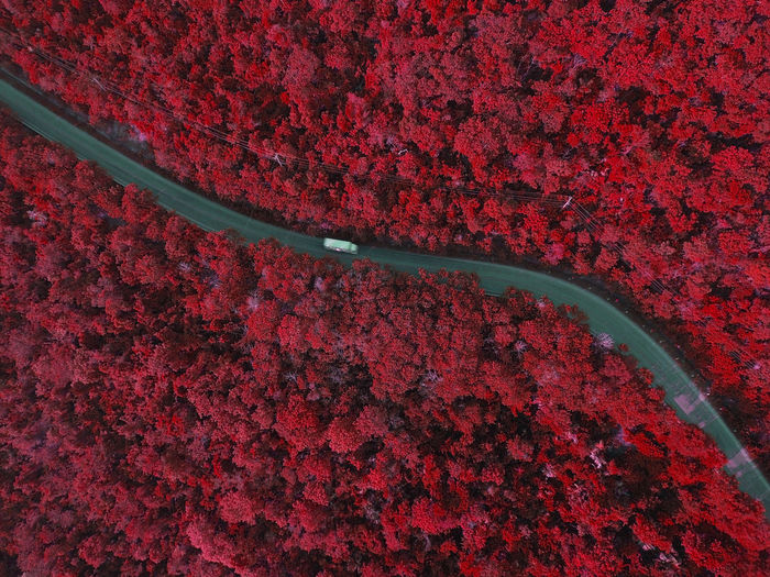 white truck in red forest Delivery Transportation Agriculture Backgrounds Beauty In Nature Day Flower Flowering Plant Freshness Full Frame Growth High Angle View Infared Land Logistic Nature No People Outdoors Plant Red Scenics - Nature Tree Truck