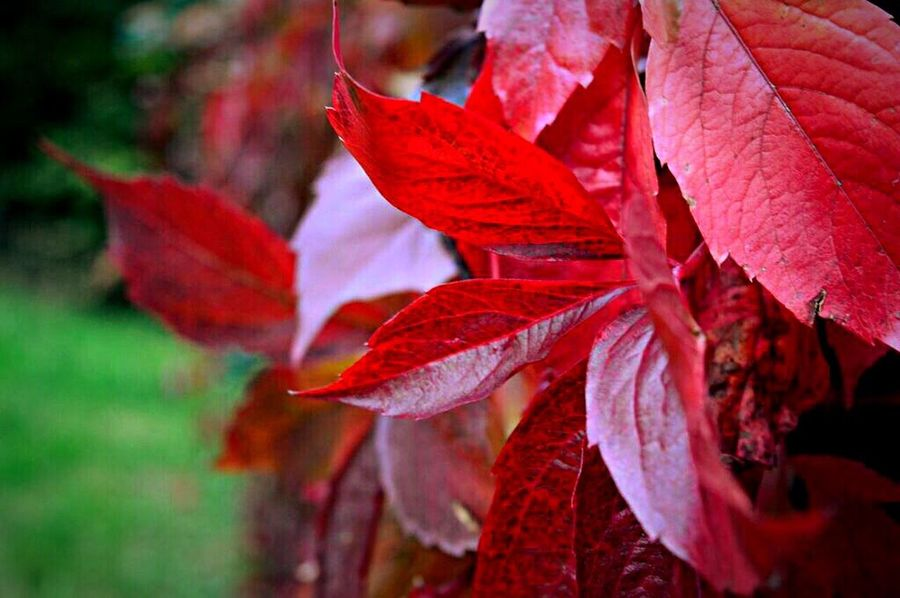 Fall Beauty Picture Paint Colorful Awesome Amazing Photography Taking Photos 👌😎